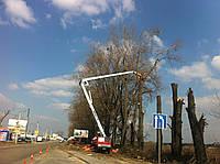 Срезание дерева по частям. Удалить, Спилить дерево Киев цена.