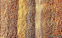 Пропозиція на сорта озимих культур врожаю 2017 року