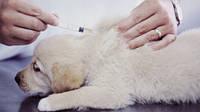 Акция!!! Комплексная вакцинация собак всего 250грн!!!