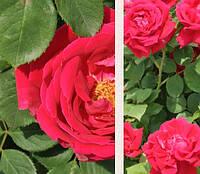 Варенье из лепестков роз (400 г), фото 5