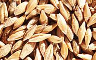 Эффективная схема для протравливания семян