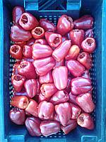 Перец красный замороженный под фаршировку