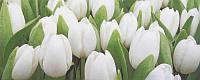 Плитка облицовочная АТЕМ Tulip Mini W (16967)