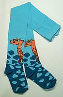 Мальчиковые колготки с Жирафом бирюзового цвета
