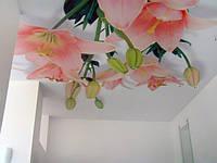 Фотопечать на натяжных потолках ( Pongs, Clipso)