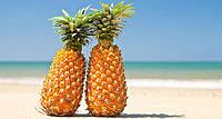 АНАНАС (Ananas comosus), фото 1