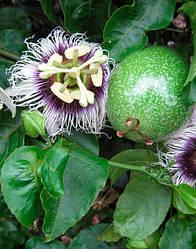 МАРАКУЙЯ - молодое растение 60-100см.