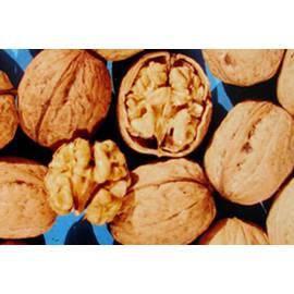 Грецкий орех Казаку (привитой)