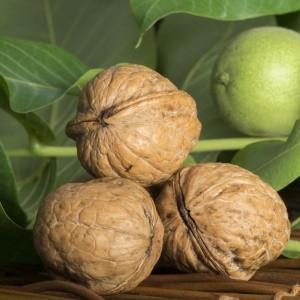 Грецкий орех Топоровский  (привитой)