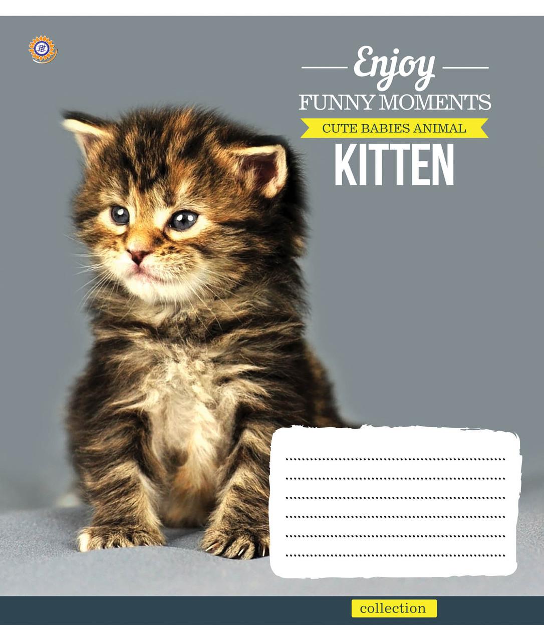 Тетрадь в клетку с котиками Kittens Funny Moments -17 на 12 листов