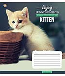 Тетрадь в клетку с котиками Kittens Funny Moments -17 на 12 листов, фото 4