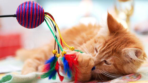 Выбираем подарок для кошки