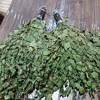 Банный веник из берёзы