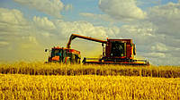 Министерские прогнозы урожая зерновых