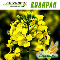 Семена Рапса озимого КОДИРАП. Caussade Semances