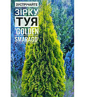 Thuja occidentalis 'Golden Smaragd' Туя західна,C2-C3,20-30см
