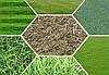 Давно мечтаете о газоне? Мы поможем Вам с выбором!