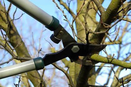 Особенности зимней, весенней и осенней обрезки деревьев