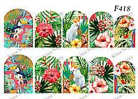 Слайдер -дизайн Тропическин Цветы и Птицы F418