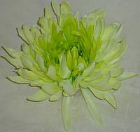 Головка хризантемы зеленой большой, фото 1