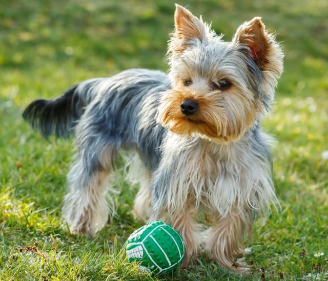 Stefanplast Mini Gulliver Переноска для маленьких собак, кошек и грызунов