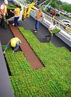 Модульное озеленение крыш Green Roofs, bring nature to your life…