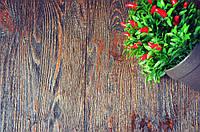 Деревянный фотофон