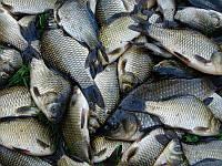Кормовые добавки для рыбы тм Gepard
