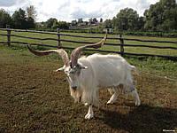 Комбикорм для коз и овец тм Gepard