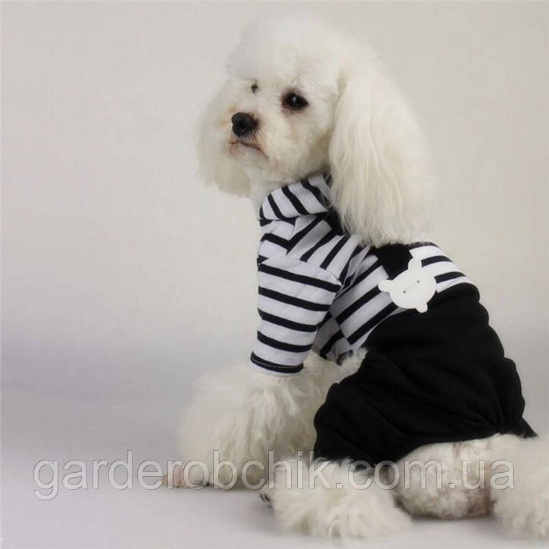 """Комбинезон  для собаки, кошки  """"Полосатый"""". Одежда для собак"""