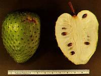 Аннона муриката (гуанабана, гравиола, саусеп)