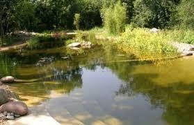 Биопрепараты для очистки водоема