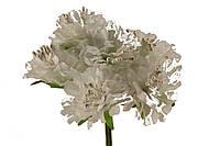 Букет пион  белый 2015-1-7-1