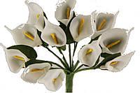Каллы 5633-1-6-1 белые