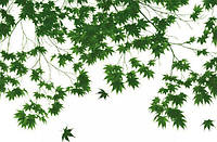 Фотообои на стену: Осенняя листва, 175х115 см