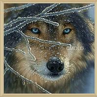 """Алмазная вышивка 30х30 - набор """"Волк с голубыми глазами"""""""