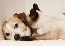 Товары для собак и кошек