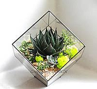 """Флорариум """"Куб"""" с суккулентами. Ребро -18 см, ширина -26 см, высота -30 см."""