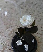 Белая Роза в Колбе белый бриллиант - Belle Rose