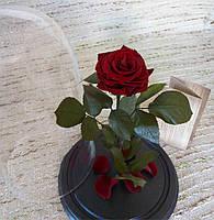 Бордовая Роза в Колбе багровый гранат - Belle Rose
