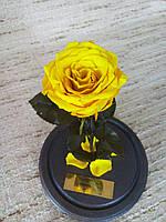 Желтая Роза в Колбе солнечный цетрин - Belle Rose