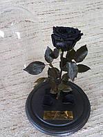 Черная Роза в Колбе черный принц - Belle Rose