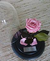 Розовая Роза в Колбе розовый жемчуг - Belle Rose