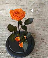 Оранжевая Роза в Колбе огненный янтарь - Belle Rose
