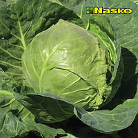 Семена капусты белокочанной Экспресс F1 / Exspress F1 от Наско (Nasko), Украина, 500 семян