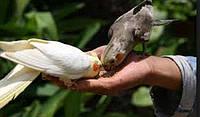 Корм для средних попугаев корелла,нимфа,неразлучника