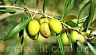 Оливковое масло De Cecco Olio di oliva рафинированное 1 л., фото 5