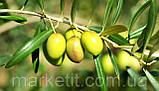 Оливкова олія De Cecco Olio di oliva рафінована 1 л., фото 5