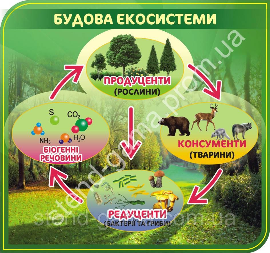 "Стенд ""Будова екосистеми""(0.8х0.75)"