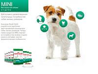 РОЯЛ КАНИН МИНИ для маленьких собак до 10 кг